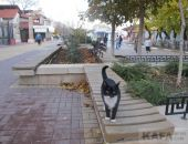 Прогулка по осенней Феодосии. Ноябрь 2016 года.:фоторепортаж
