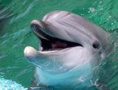 Двое керчан за вылов дельфина получили штраф на общую сумму в 900 тыс. рублей