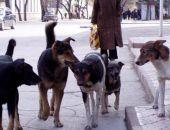 Бродячих собак в Крыму теперь не будут отстреливать, но как с ними бороться - неясно