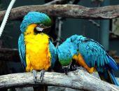 В Воронежском зоопарке усыпят всех птиц