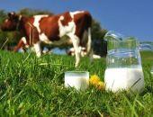 В Крыму в 2016 году упало производство говядины, молочной продукции и круп