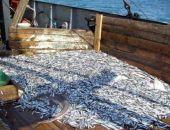 Рыбные ресурсы Азовского моря практически уничтожены, – эксперты