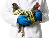 Угроза птичьего гриппа в Крыму