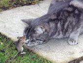 Ученые научились превращать мышей в агрессивных хищников-зомби