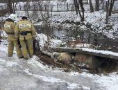 В столице Крыма спасают лошадь, провалившуюся под бетонную плиту в районе Воронцовского парка
