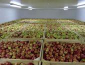 Первое в Крыму фруктохранилище построит группа компаний «Скворцово»