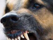 Вчера в центре Москвы пенсионерку загрызли сторожевые собаки