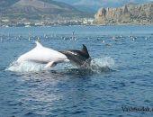У побережья Крыма близ Судака заметили уникального белого дельфина