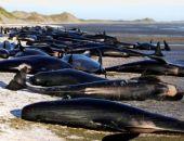 В Новой Зеландии массовое самоубийство дельфинов (видео)