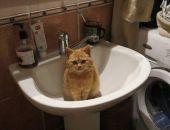 В Феодосии выберут самого красивого кота