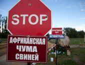 В Белогорском районе Крыма снова свирепствует африканская чума свиней