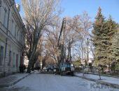 В Феодосии сносят аварийные деревья