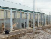 Власти столицы Крыма готовы заключить контракт на строительство приюта для животных