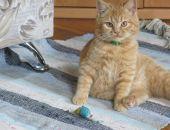 В России сегодня отмечается День кота