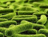 Пребиотики улучшают сон и помогают при стрессе, – ученые