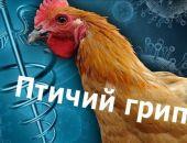 В Подмосковье вспышка птичьего гриппа, сожгли 25 тыс. птиц