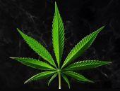 В Крыму военнослужащий запаса осуждён на 10 лет колонии за попытку сбыта 32,5 г марихуаны