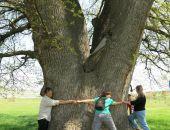 В Крыму обследуют старые деревья в рамках проекта «Деревья – памятники живой природы»