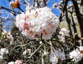 Крым. Начало весны в Никитском ботаническом саду (фоторепортаж)