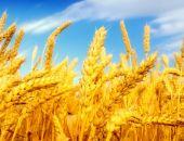 Новый конфликт между Турцией и Россией, - теперь из-за поставок пшеницы