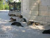 Строительство приюта для животных в Феодосии – вопрос времени
