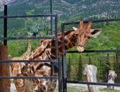 Налоговая Крыма опровергла слова Зубкова о закрытии зоопарка «Сказка»