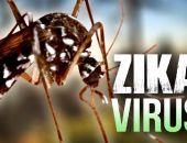 В Крыму для предотвращения появления вируса Зика обещают уничтожить комаров