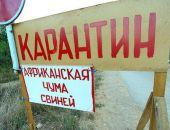 В Белогорском районе Крыма продолжают выявлять новые очаги африканской чумы свиней