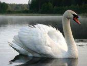 Народные ополченцы пресекли попытку незаконного вывоза из Крыма в Москву лебедей