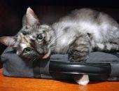 В Феодосии определят самого красивого кота