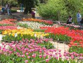 В Крыму 10 апреля откроется «Парад тюльпанов» в Никитском ботаническом саду