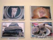 В Феодосии подвели итоги фотоконкурса «Любимый котейка»