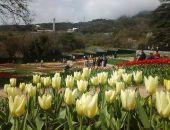 В Ялте в Никитском ботаническом саду сегодня стартовал «Парад тюльпанов» (фото)