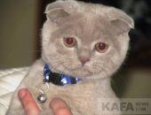 В Феодосии состоялась выставка кошек