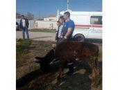 В Крыму спасатели достали осла, упавшего в яму несколько дней назад (фото)