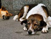В Ялте на решение проблемы бездомных собак выделили более миллиона рублей