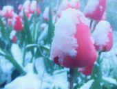 Сегодня ночью Симферополь засыпало снегом