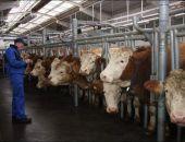 В Крыму феодосийская компания построит животноводческий комплекс за 18 млрд руб.