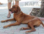 Выставку собак в Феодосии отменили из-за погоды