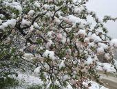 Вчерашние снегопады не навредили цветущим садам в Крыму, – Минсельхоз РК