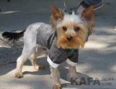 В Феодосии состоится выставка собак всех пород