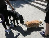 В Феодосии прошла выставка собак всех пород:фоторепортаж