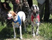 7 мая - Выставка легавых собак в Феодосии