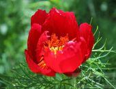 Прогулка по цветущим холмам на гору Сарытлык:фоторепортаж