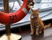 Стало известно, зачем севастопольские моряки взяли кота в поход к берегам Сирии