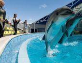 Дельфинарий «Коктебель»  готовится к встрече гостей