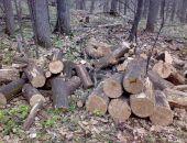 За сруб десяти дубов на территории лесничества двое жителей Крыма осуждены на 2,5 года