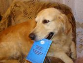 За месяц в Крыму более 100 домашних животных получили паспорта, – Госкомветеринарии
