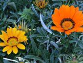 Феодосии нужно больше цветов:фоторепортаж