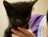 Крымчанка бросилась под колёса авто, чтобы спасти котёнка (видео)